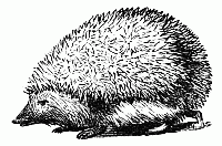Mr. Hedgehog cares where the Mary Baker books are. Here are his collection of links.